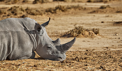 Buy stock photo Shot of wildlife out in the african bush