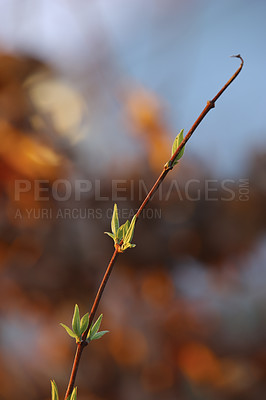 Buy stock photo A sharp and detailed photo of nature details in springtime