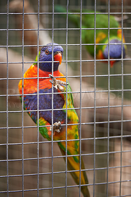 Buy stock photo Shot of a parrot in an enclosure