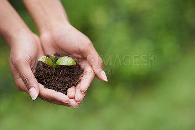 Buy stock photo Closeup shot of a woman's hands holding a growing plant