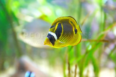 Buy stock photo Shot of a fish in an aquarium