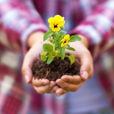 Buy stock photo Cropped shot of a woman holding a flowering seedling in a handful of soil