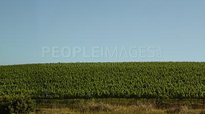 Buy stock photo Farmland and blue skies
