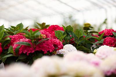 Buy stock photo Fresh flowers at a nursery
