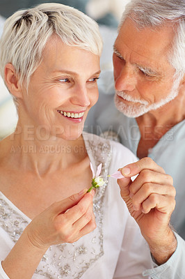 Buy stock photo Closeup portrait of a happy senior couple playing with a flower