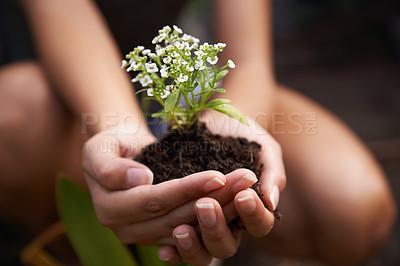 Buy stock photo Closeup shot of a woman holding soil with a flowering plant in her cupped hands