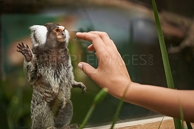 Buy stock photo A woman reaching out to a cute monkey