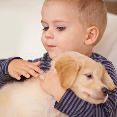 Buy stock photo Closeup shot of a little boy petting a puppy