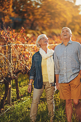 Buy stock photo Shot of a happy senior couple holding hands while walking in a vineyard