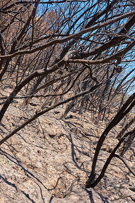 Buy stock photo Wildfire - destruction by nature