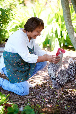 Buy stock photo Shot of a mature woman playing with her pet chicken in her garden at home