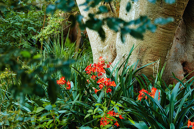 Buy stock photo Tropical rain forest - Africa