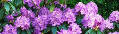 Buy stock photo Shot of beautiful flowers outside
