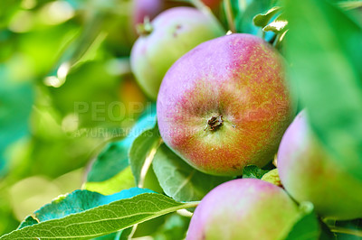 Buy stock photo A photo of taste and beautiful apples