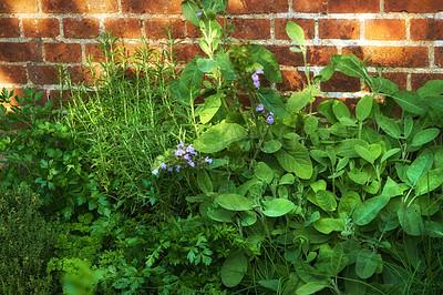 Buy stock photo Small herb gardenSmall herb garden