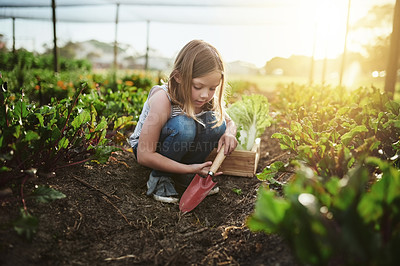 Buy stock photo Full length shot of an adorable little girl helping out on her family's farm