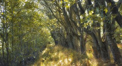 Buy stock photo Hardwood forest uncultivated - Denmark
