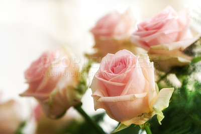 Buy stock photo A beautiful red and pink roses in a vase