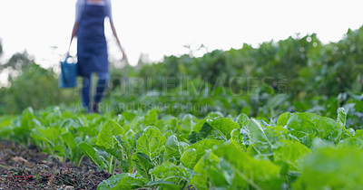 Buy stock photo Cropped shot of an unrecognizable female farmer working in the fields on her farm