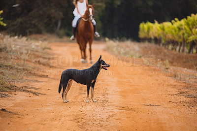 Buy stock photo Shot of a dog on a farm with a woman riding a horse in the background