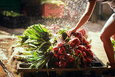 Buy stock photo Cropped shot of an unrecognizable female farmer rinsing off freshly picked  produce at her farm