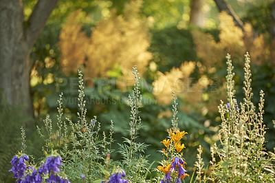 Buy stock photo A garden of all seasons