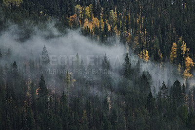 Buy stock photo Shot of clouds covering a forest outdoors in the East Kootenay region of British Columbia, Canada