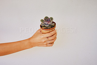 Buy stock photo Cropped studio shot of a woman holding a succulent plant against a grey background