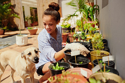 Buy stock photo Shot of a young woman gardening in the backyard at home with her dog