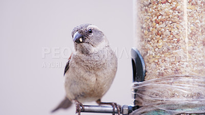 Buy stock photo Shot of a bird eating seeds from a feeder in a garden