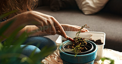 Buy stock photo Cropped shot of a woman adding soil to her pot plant at home