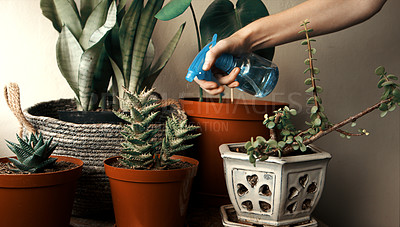 Buy stock photo Cropped shot of a woman using a spray bottle to water her plants at home