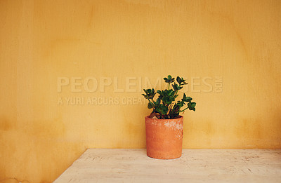 Buy stock photo Shot of a plant growing in a pot on a table at home