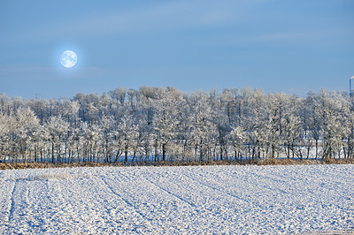 Buy stock photo The forest inwinter