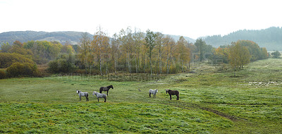 Buy stock photo a photo of a horse in natural setting