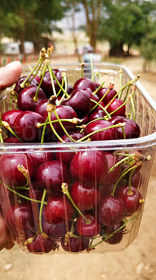 Buy stock photo Cropped shot of a man holding a punnet of freshly picked cherries