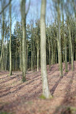 Buy stock photo Nature photos from Denmark