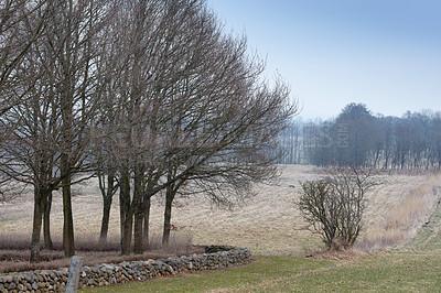 Buy stock photo Winter landscape on a sunny day with blue sky