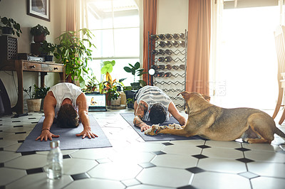 Buy stock photo Shot of an adorable dog trying to play with two men doing an online yoga class at home