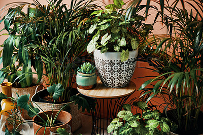Buy stock photo Shot of plants growing in vases at home
