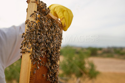 Buy stock photo Shot of an unrecognisable beekeeper holding a honeycomb filled with bees on a farm