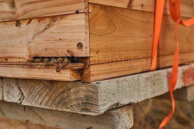Buy stock photo Shot of a beehive frame on a farm
